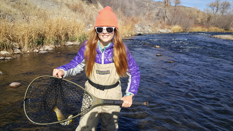 Middle provo brown trout